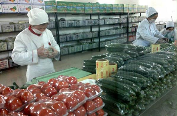 蔬菜配送净菜加工行业前景研究报告